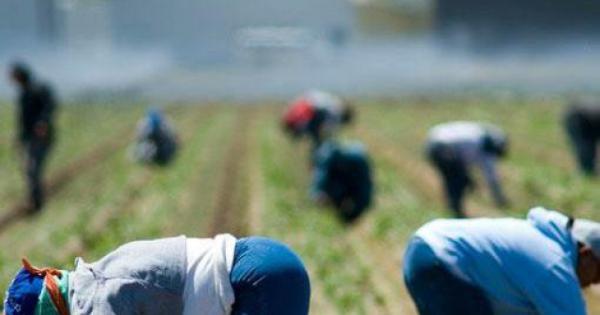 Lavoro nero e caporalato, Caritas e Fai Cisl aprono sportello nel Vallo di Diano
