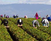 Emersione del lavoro irregolare. Caritas e Cisl aprono sportelli nel Vallo di Diano